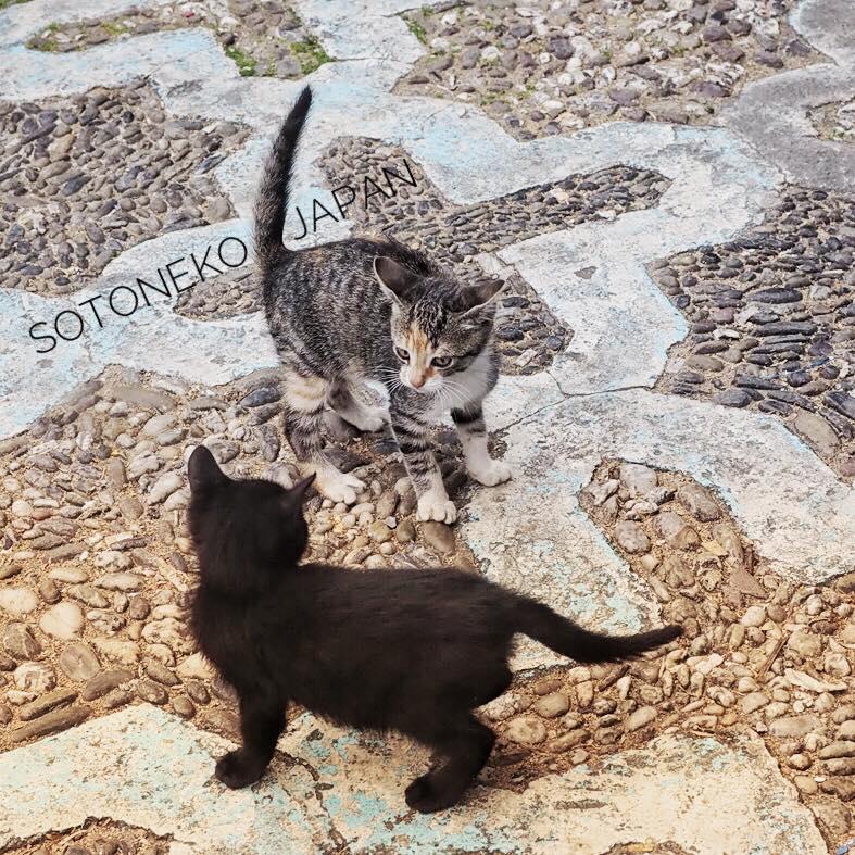 チビBlack cat