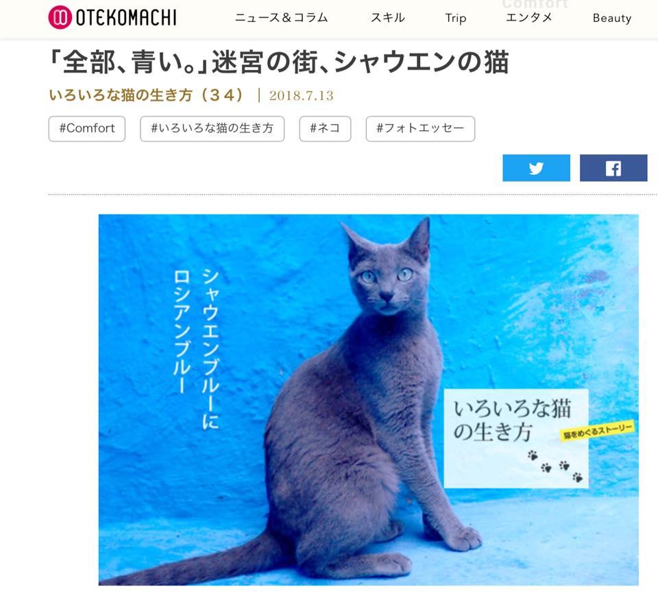 『「全部、青い。」迷宮の街、シャウエンの猫』を公開
