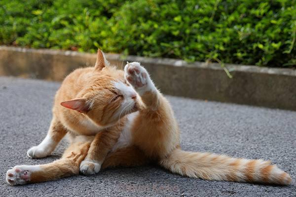 ダンディーな猫の朝は、…@プランジャン(スイス)