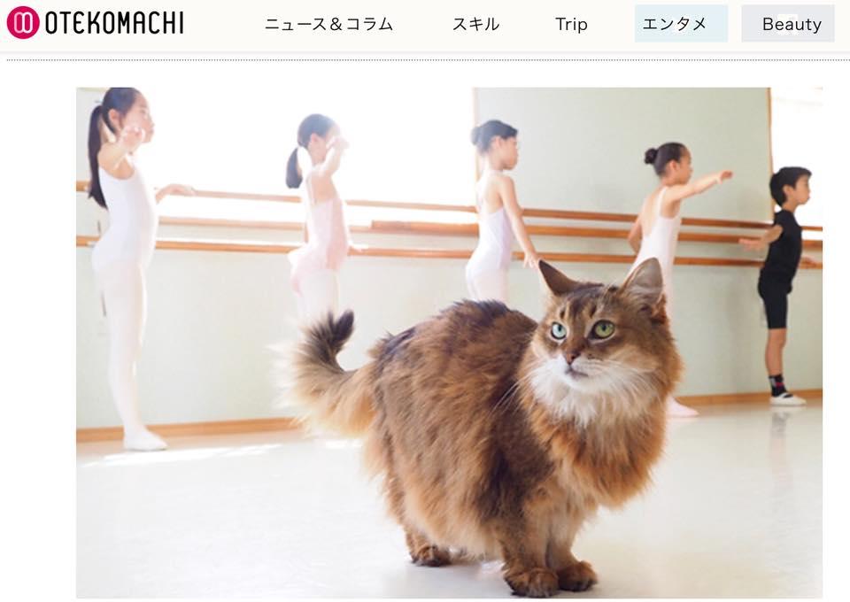 『生徒たちにも大人気 バレエ教室の姉妹猫』