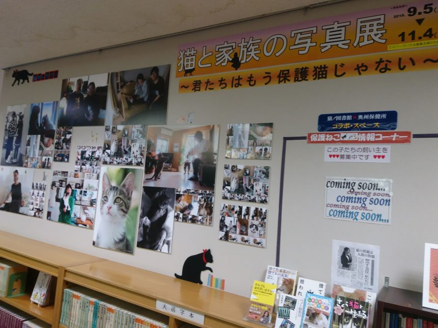 猫ノ図書館4