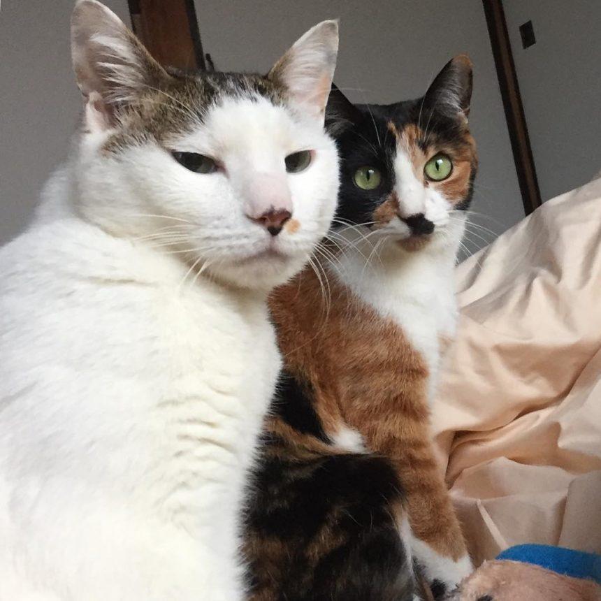 早朝からワサワサ喧しかった猫たちでした。
