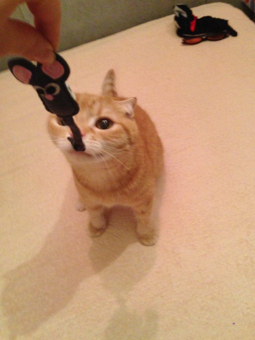 初代猫店長リクオくん2
