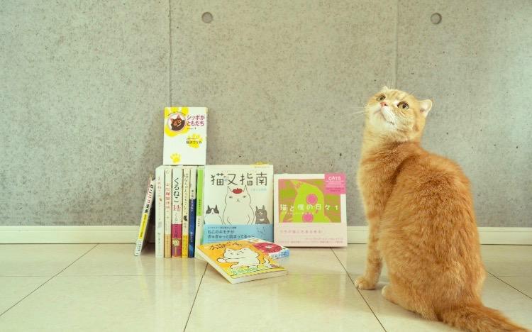 初代猫店長リクオ