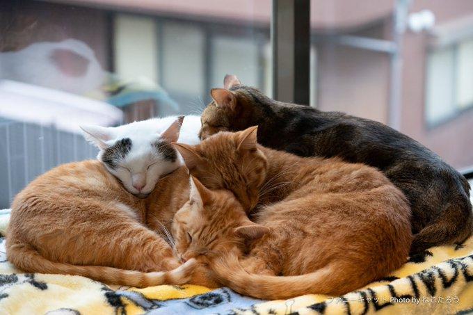 猫の大盛り。